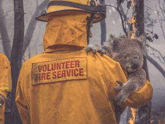 Bushfire Appeal